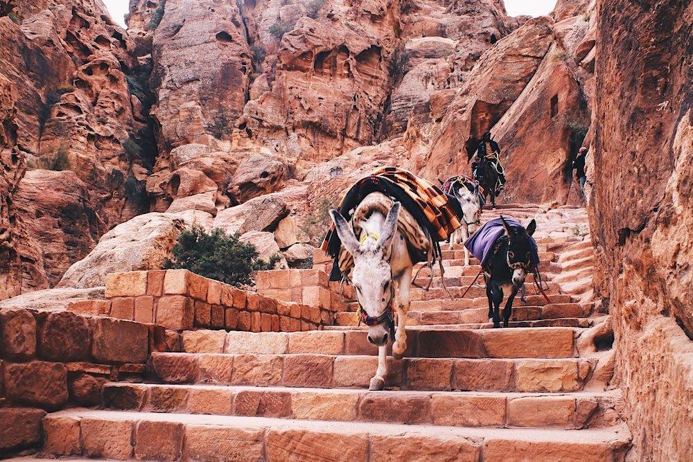 Petra Hiking - Donkey Climbing Stairs